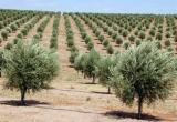 ΦΥΤΑ ΚΑΙ  ΔΕΝΤΡΑ φυτά Και δένδρα δέντρα