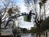 Καθαρισμός αποψίλωση οικοπέδων ακινήτων χώρων Από δένδρα χόρτα ζιζάνια θάμνους κτλ.